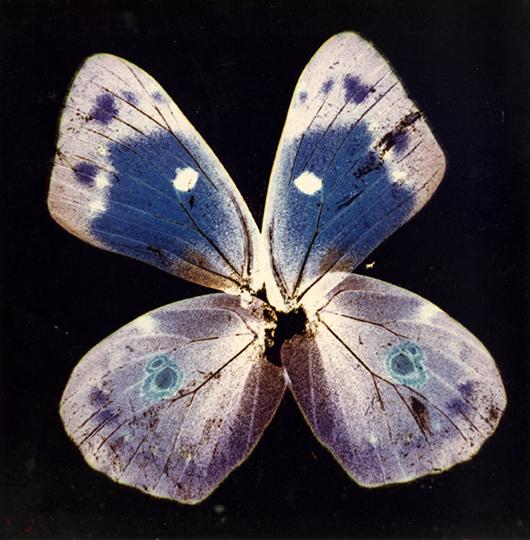 3 - Herbarium